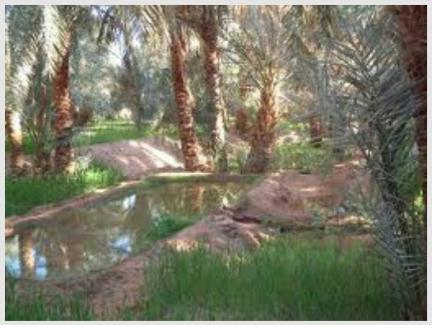 A Peaceful Oasis