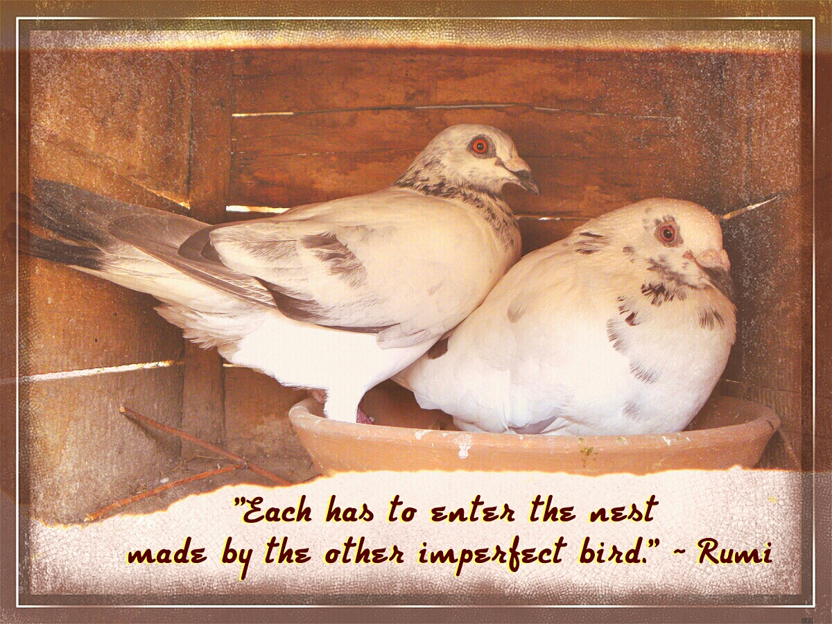 Rumi Quote Photo Quote The Nest In Rumi's Rose Garden  Aisha's Oasis