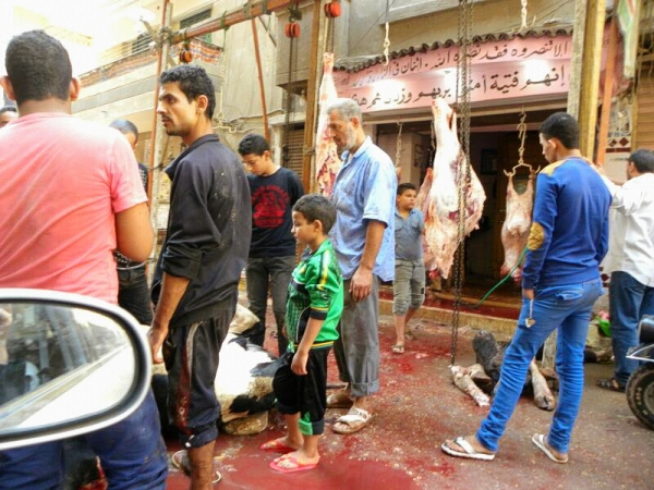 Slaughtering a Cow for Eid al Adha in a street of Egypt by Aisha Abdelhamid