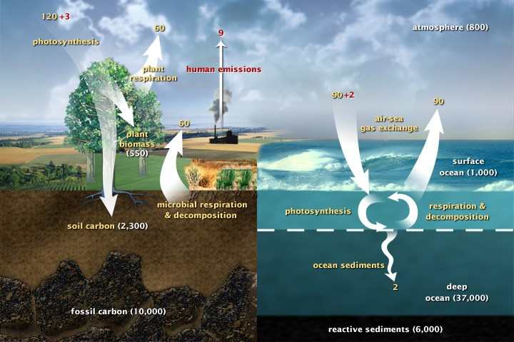 the carbon cycle the movement of carbon throughout the biosphere