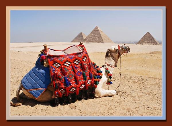 giza pyramids and camel